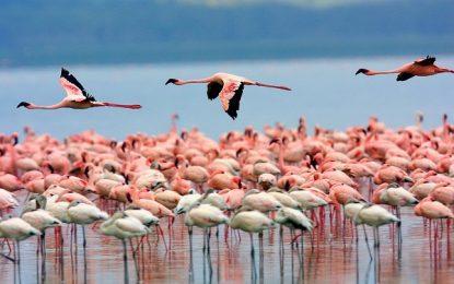 Khám phá thiên đường động vật hoang dã tại Kenya
