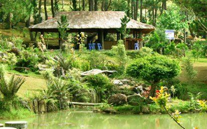 Thung lũng Vàng ở Đà Lạt một điểm du lịch mới hấp dẫn