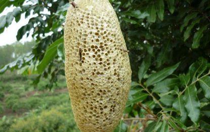 Mật ong Đà Lạt – Món quà cho cuộc sống khỏe mạnh